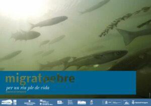 Exposició «Migratoebre» a La Ràpita @ Institut de Recerca i Tecnologies Agroalimentàries (IRTA)
